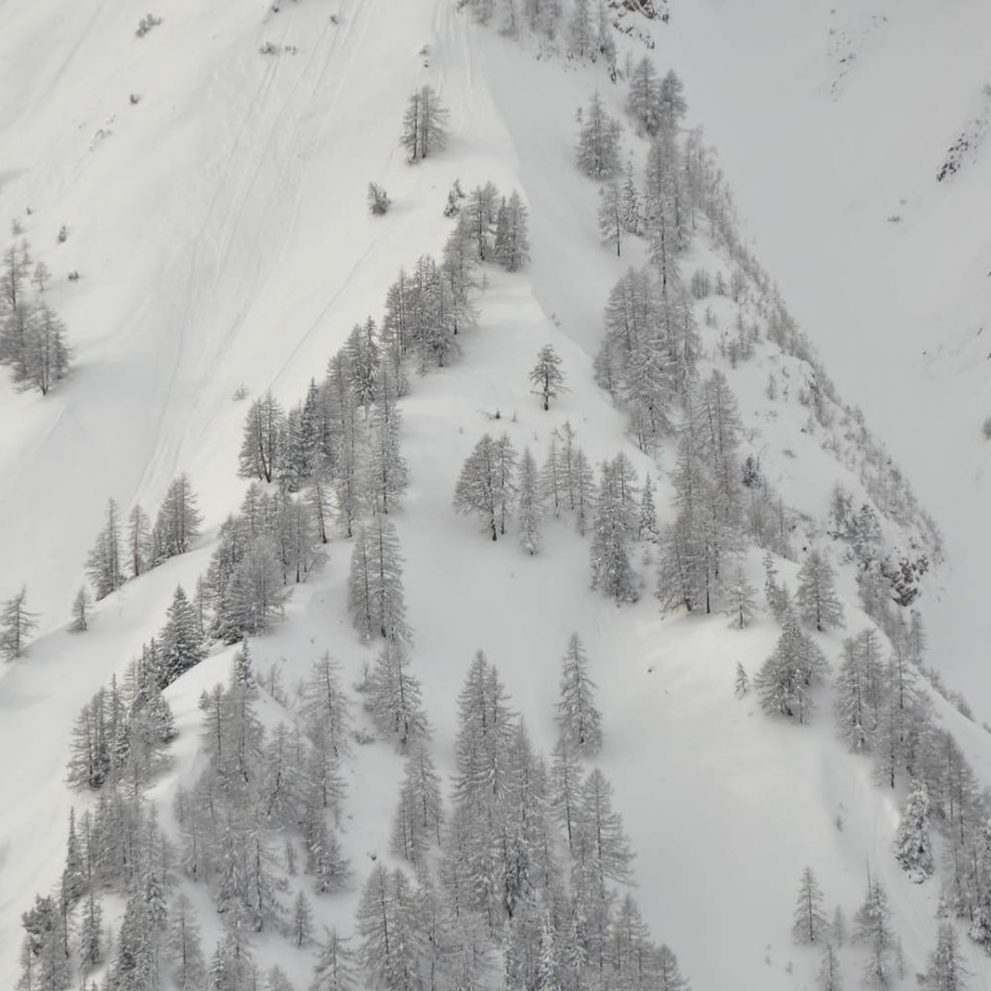 Fresh snowfall is the perfect time to hit the tree lines.