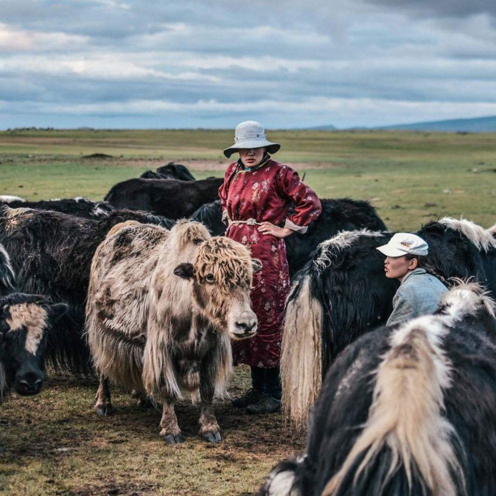 Morning yak milking is not an easy job, the whole family has to help.