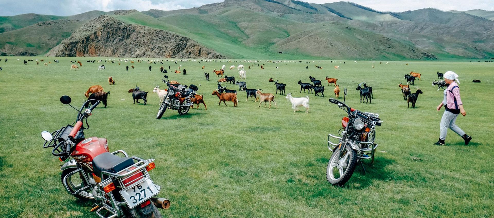An average mongolian sheep herd is around 500 but some are way over a 1000.