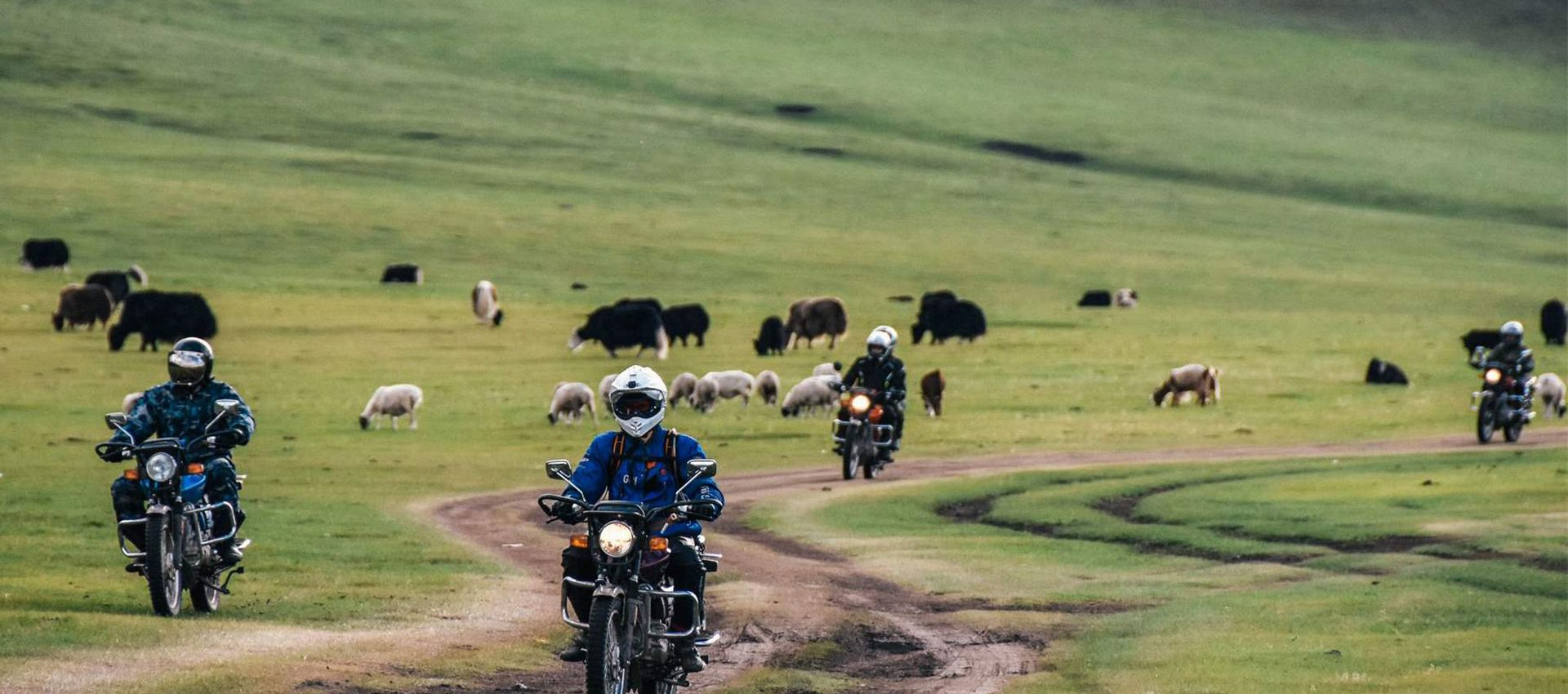 We will roam free on the greenlands of the wild Steppe.