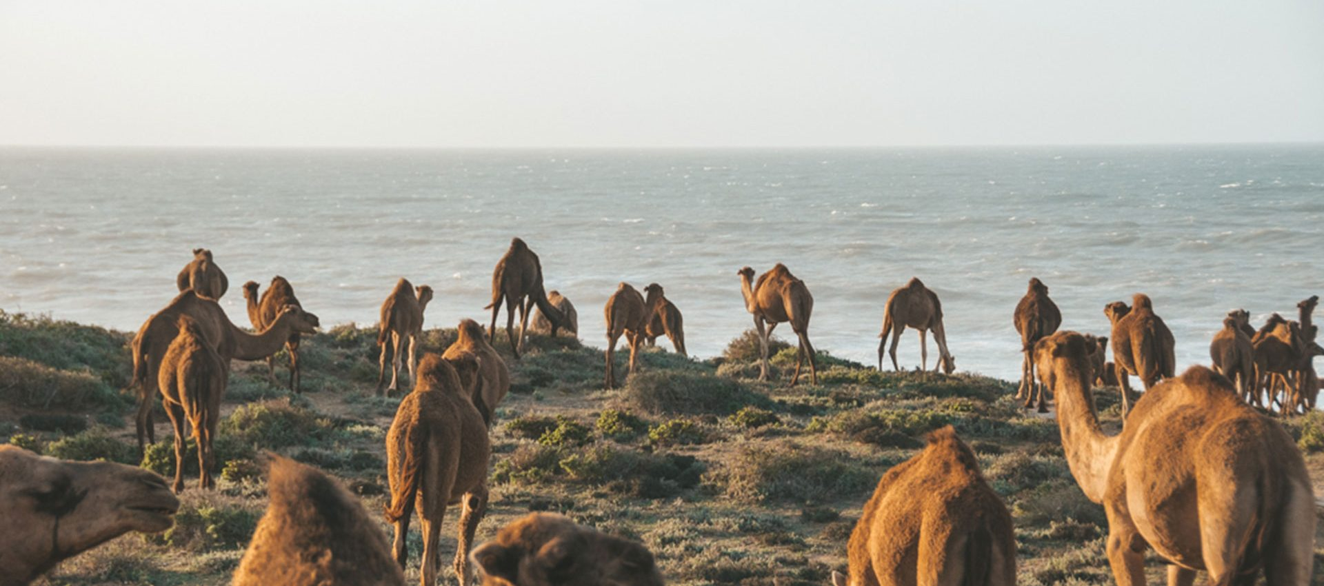 During our day trips heards of Dromedary camels are a regular sight.